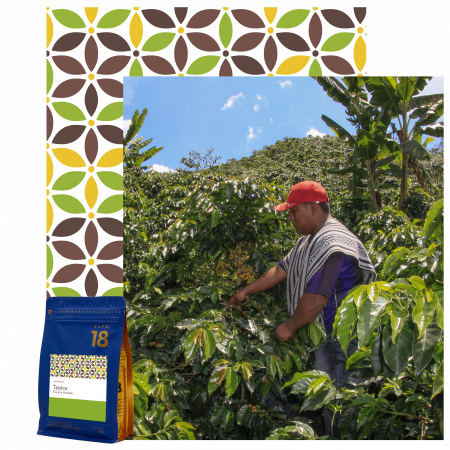 typica-08